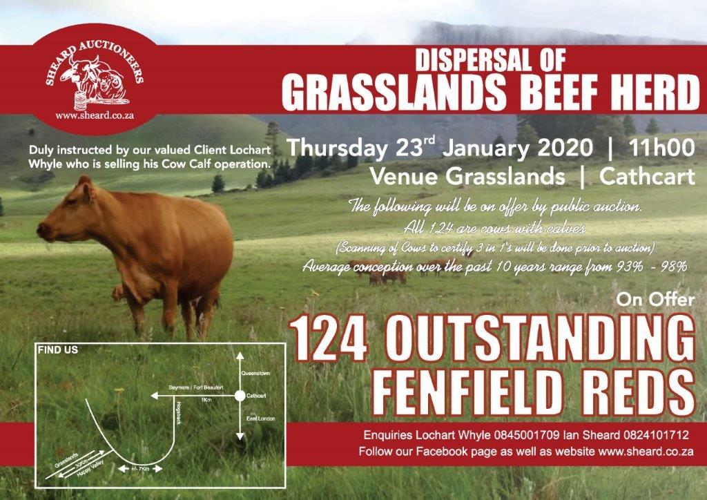 Sheard Auctioneers GRASSLANDS BEEF HERD